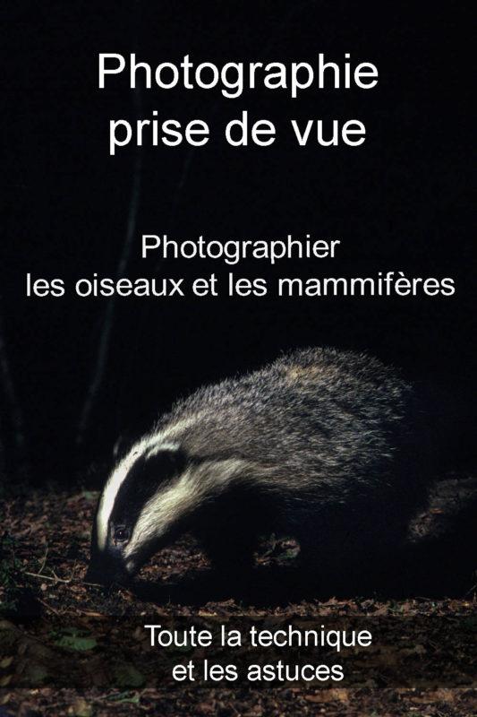 photographier oiseaux mammifères