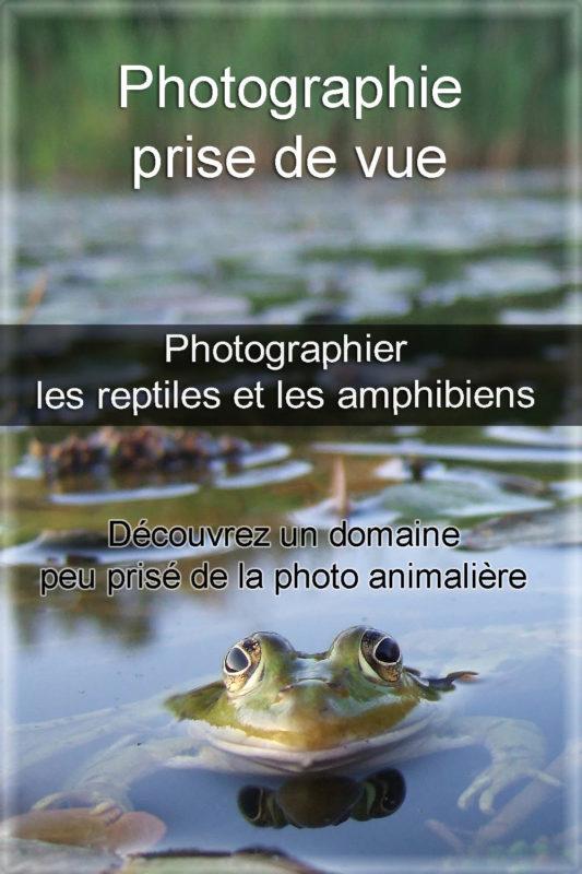 photographier les reptiles et les amphibiens